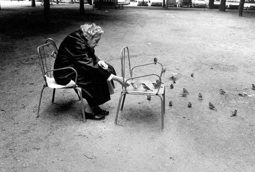 Feeding-birds
